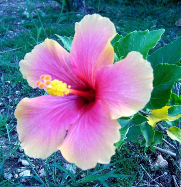 Bien connu Saint-François en Guadeloupe dans les petites Antilles françaises GG12